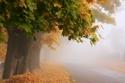 صور ساحرة تكشف جمال الخريف الحقيقي في بولندا