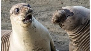 اضحك من قلبك: تصرفات كوميدية للحيوانات بعضها يشبه البشر بدرجة جنونية