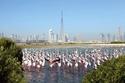 صورة أخرى لمحمية رأس الخور في دبي
