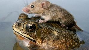 حيوانات تنقذ حيوانات أخرى في صور مؤثرة اُلتقطت في الوقت المناسب