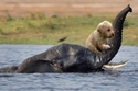 إنقاذ كلب من الغرق