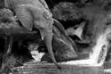 فيل ينقذ قط