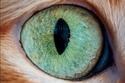 صور مذهلة لعيون القطط عن قرب.. الجمال كله في لقطاتٍ مُكبَّرة