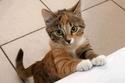 صور طريفة لقطط تطلب الاعتذار من أصحابها.. لا تفوتوا مشاهدتها