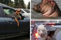 18 صورة كوميدية لحيوانات واجهت الكاميرا بنظرات نجومية جريئة