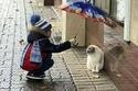 لأن القطط تخاف من المطر