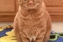 القطة بطاطا في منزل صاحبتها آشلي نورلين