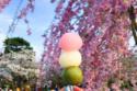 حلوى هانامي دانجو، كيتو ، اليابان