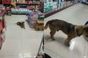 كلب وفي ينتظر صاحبه لأكثر من 3 شهور