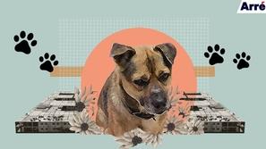 كلب وفي ينتظر صاحبه لأكثر من 3 شهور أمام المستشفى: لم يدرك أنه توفي