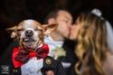 صور: لهذا السبب يرغبون بالزواج.. لحظات مؤثرة لا تُنسى من حفلات الزفاف
