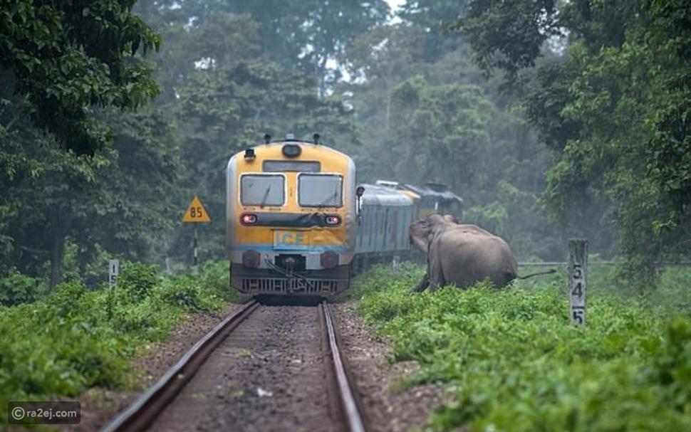 لقطات نجاة فيل بأعجوبة من الموت المحقق أثناء عبوره قضبان السكة الحديد