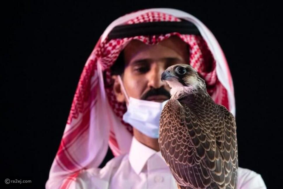 سعودي يبيع صقره بسعر خيالي: الصدفة كانت السبب