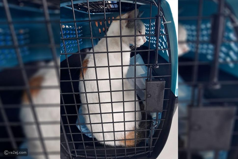 ضبط قط وهو يهرب المخدرات إلى سجن بنما