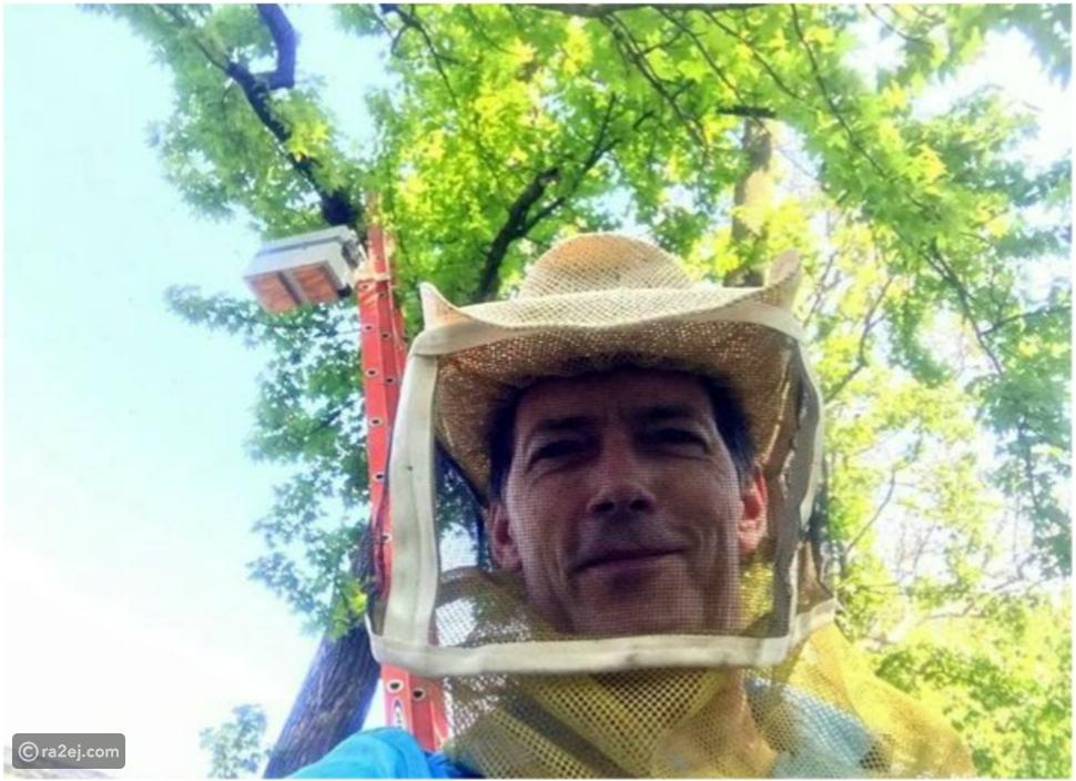صدق أو لا تصدق.. امرأة تكتشف 35 ألف نحلة في سقف منزلها.. فماذا فعلت؟!