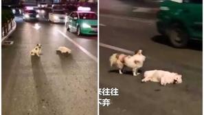 فيديو يفطر القلوب.. يقف إلى جانب صديقه 3 ساعات بعدما دهسته سيارة!