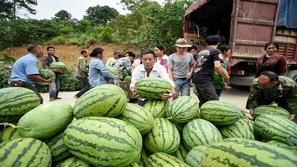 شاب يلتهم 8 من ثمار البطيخ في غصون نصف ساعة فقط!