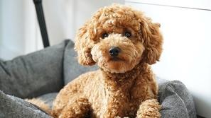 أحدث معادلة لحساب عمر الكلب بدقة بالنسبة للبشر