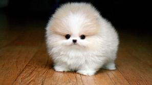 ١٠ صورة لحيوانات صغيرة لطيفة