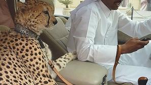 بالصور: ٣٠ أمر غريب تراه كل يوم في دبي