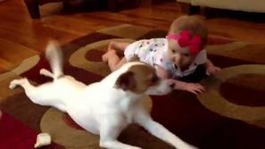 فيديو رائع لكلب ذكي جدا وصبور يعلم طفلة الزحف