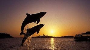 أروع صورالتُقطت لأجمل المخلوقات البحرية