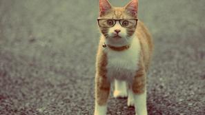 بالصور: 25 سبب يجعلك تفكر بأمتلاك القطط