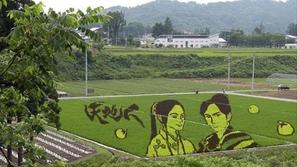 قرية ايناكاداتي اليابانية.. حيث مزارعو الرز فنانون أيضا