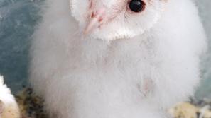 ٢٩ صورة رائعة لطيور صغيرة