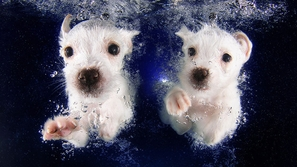 مجموعة من الصور المذهلة لكلاب تسبح تحت الماء
