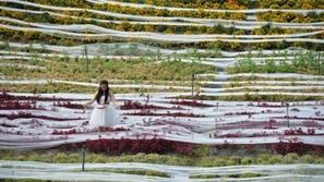 بالصور : أطول فستان زفاف في العالم