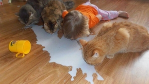 الصور المضحكة الباكية: عبث الأطفال مع بعضهم وفي المنزل !