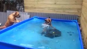 فيديو طريف لكلبين يتعاونان على إخراج لعبتهم المفضلة من الماء