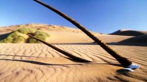ساحل الهيكل العظمي هو مكان حقيقي على الأرض!!