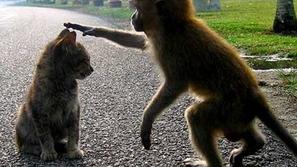 21 صورة لمواقف مضحكة لمجموعة متنوعة من القرود