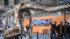 بالصور : عرض الهيكل العظمي لأكبر ديناصور فى العالم ببكين