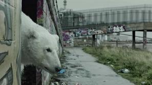 بالفيديو : ماهو سبب تجول دب قطبي من القطب الشمالي في شوارع لندن؟