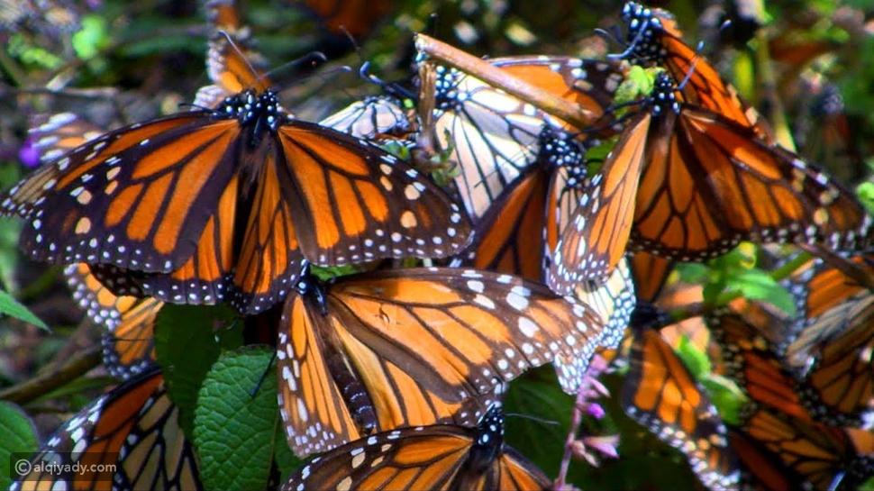 الحيوانات الـ 11 التي تستطيع تغيير جنسها في مملكة الحيوانات