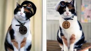 تاما.. أول قطة تتولّى نظارة محطة قطارات في اليابان