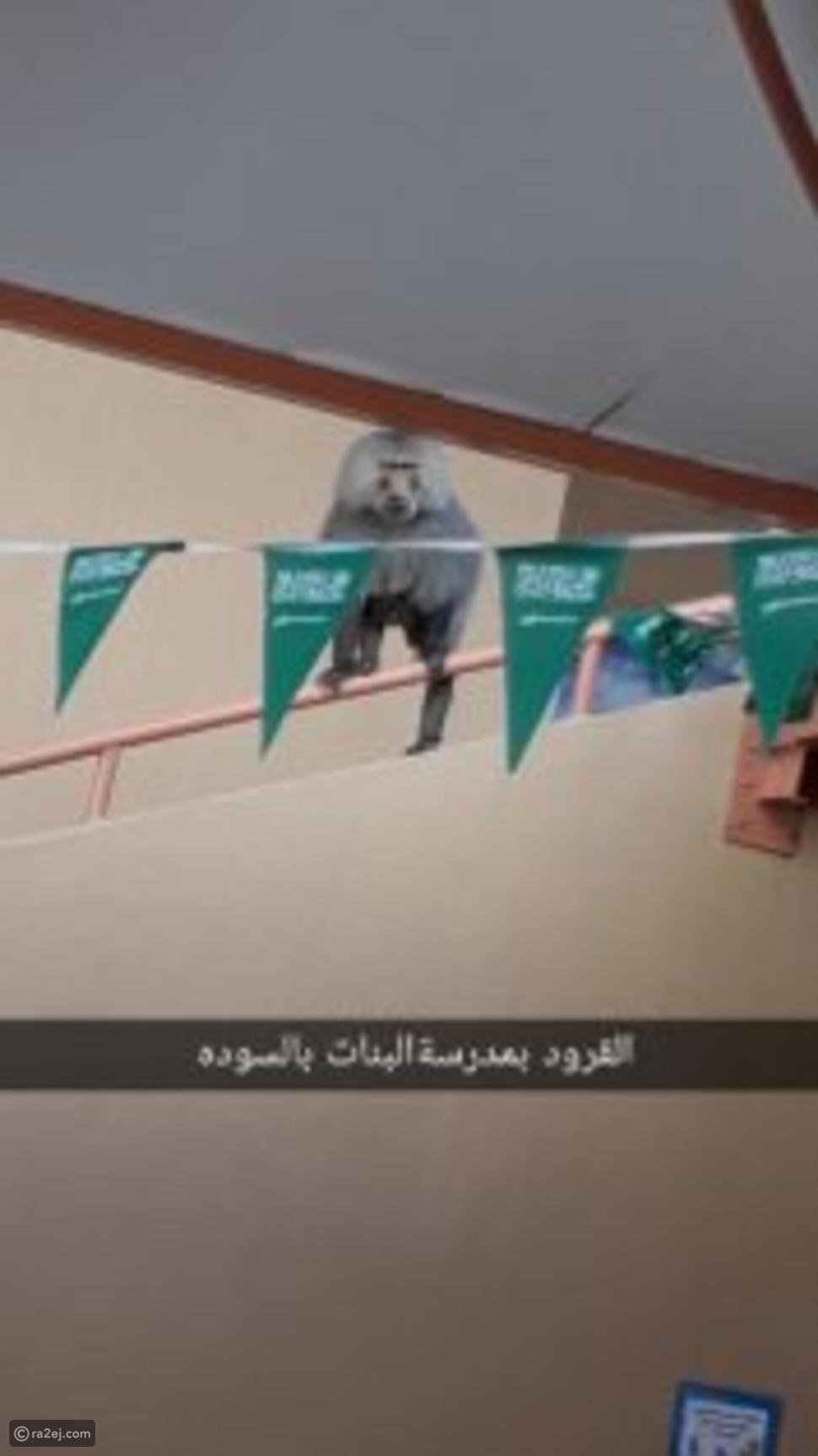 القرود تهاجم الطالبات في السعودية