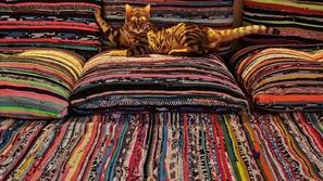 قصة القط يوشي: يتناول يومياً فطار 5 نجوم  أمام الأهرامات