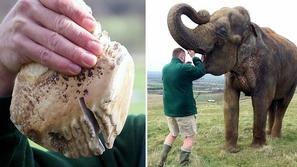 طبيب ينقذ حياة فيل مهدد بالانقراض.. شاهدوا الصور