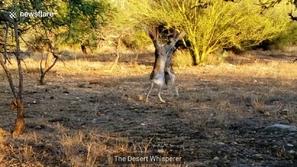 فيديو: لكمات سريعة في عراك طريف بين أرنبين ضخمين.. هكذا انتهى 😂