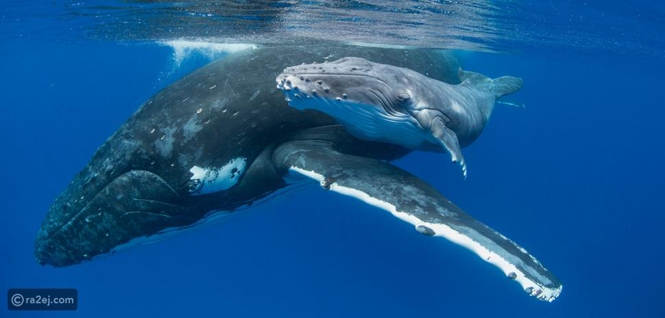 نعم حليب الحيتان! 🐋🍼