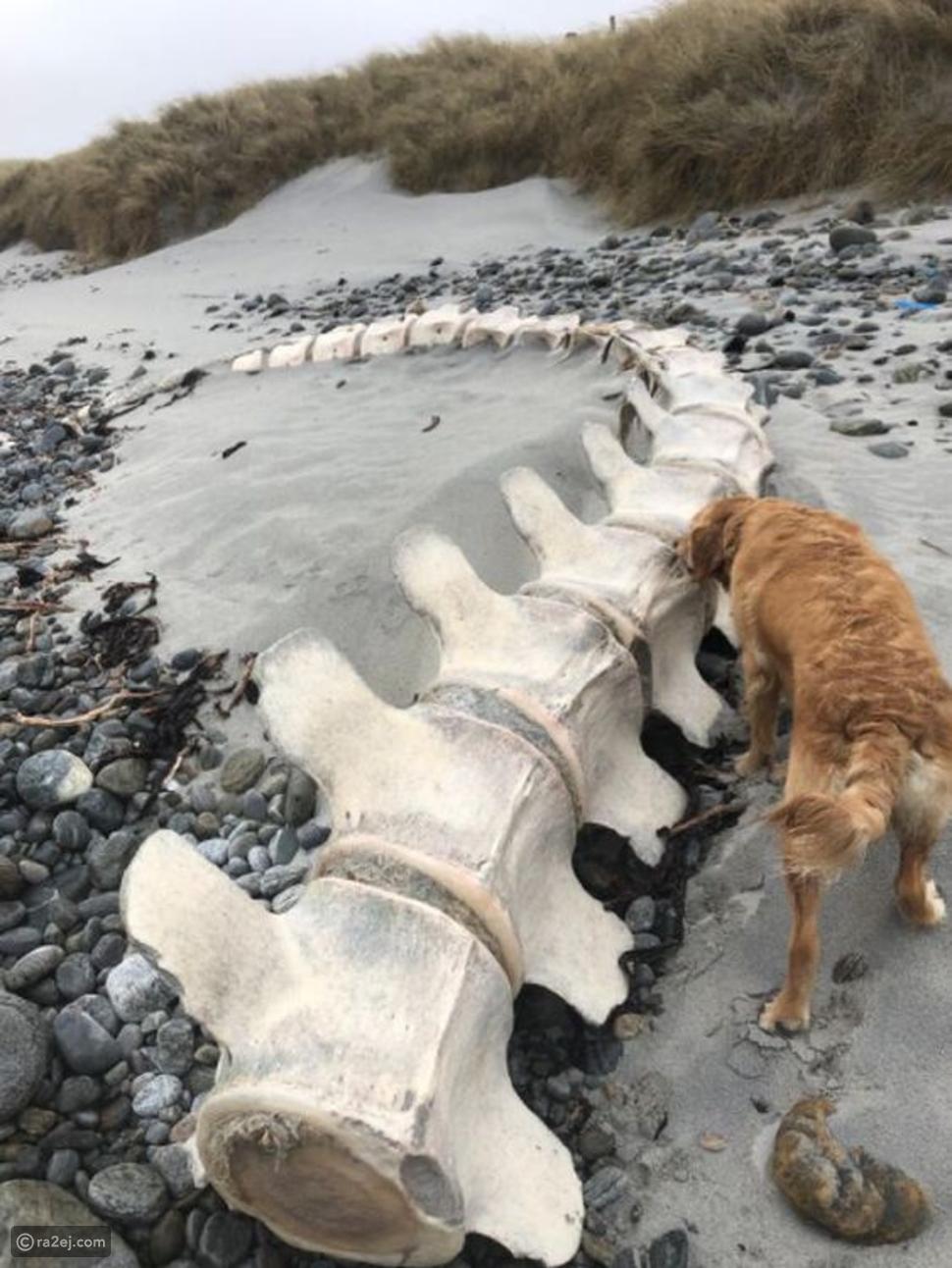 العثور على هيكل عظمي ضخم على شاطئ جنوب نيس