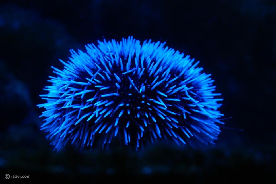 هل تعلم لماذا يسبح الناس وسط هالات ضوئية زرقاء في شواطئ تايلاند؟