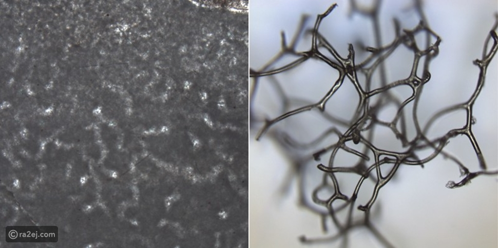 اكتشاف أقدم حيوان على وجه الأرض: عمره 890 مليون عام