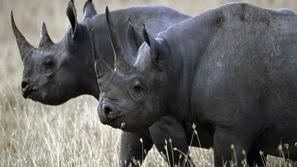 رسمياً.. إعلان انقراض وحيد القرن الأسود الإفريقي
