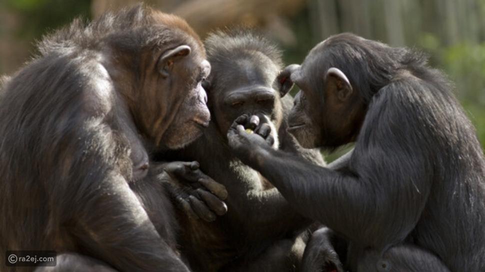 10 حيوانات ذكية بشكل لا يمكن تخيله: ربما أذكى من البشر