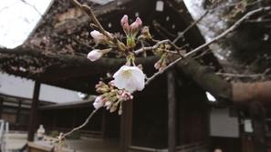 الاحتباس الحراري يصل لمؤشر خطير نمو نبات قبل موعده